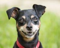 Max z uśmiechem Zdjęcia Stock