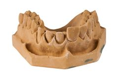 A maxila no branco fotografia de stock royalty free