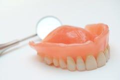 maxillary dentition arkivbilder