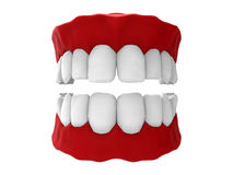 Maxillary dentition illustration. 3D render illustration maxillary dentition. The dentition has red gums and white teeth and it is isolated on a white background Stock Photos