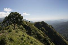 Maximum av gröna montains Ella, Sri Lanka Arkivbilder