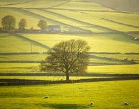 maximum för derbyshire områdesengland nationalpark Fotografering för Bildbyråer