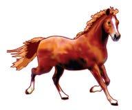 Maximum het paard Stock Foto