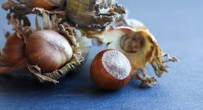Maximum mûrs de Corylus d'écrou d'aveline de noisette Grosses noisettes organiques avec les feuilles sèches sur le fond pierreux  Images stock