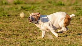 Maximum - mon meilleur ami fou de boule ! Photos stock