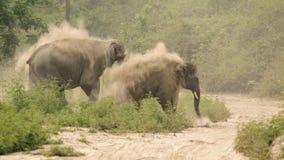 Maximus Elephas индийского слона Стоковые Фото