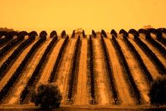 maxwell ο αμπελώνας κοιλάδων τ&omi Στοκ Εικόνα