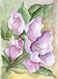 May apple tree blossom. The May apple tree blossom in watercolor Chinese style. Handamade art abstract illustration Stock Images