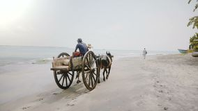 May 5 2018 Back view of traditional colorful mule cart wagon with two people on it moving along scenic beach Sri Lanka. May 5 2018 Back view of a traditional stock video footage