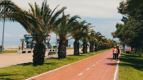 MAY 17, BATUMI, GEORGIA: The embankment of the resort city of Batumi, on which palm trees grow, walk people and cyclists stock video