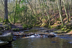 May Beck River Tumbling through the Great Wood near Falling Foss Royalty Free Stock Images