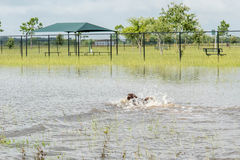 May 30, 2015 - Beverly Kaufman Dog Park, Katy, TX: dogs playing Stock Photo