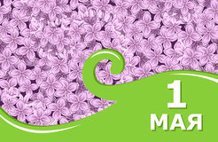 1 may card on lilacs background Stock Photography