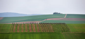 May day in Lower Austria, vineyards on the hills Royalty Free Stock Images