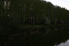 May evening calm lake. May sunny cloudless evening, blossoming May birch forest on the shore of a calm pond royalty free stock images