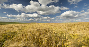 The May field in the sun. Germany Royalty Free Stock Photo