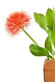 May Flower Pot . Stock Photos