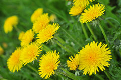 May Flowers. In a meadow royalty free stock photo
