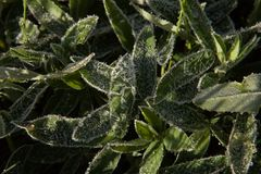 May frosts. Frost on the ground in a country Park early one morning in may Royalty Free Stock Images