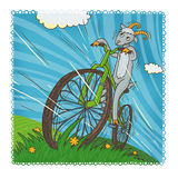 May goat. Happy goat riding on a bicycle Royalty Free Stock Photo