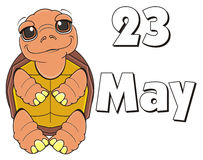 23 may holiday of turtle. Turtle stand near the date 23 may Stock Images