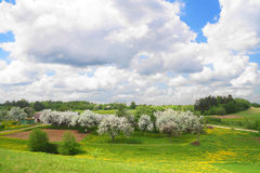 May landscape with blossoming apple-trees Stock Image
