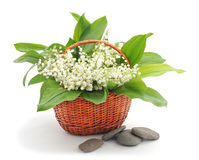 May-lily in basket. Royalty Free Stock Photos