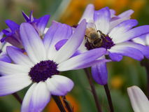 May morning pollination Royalty Free Stock Photo