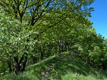 May spring landscape Royalty Free Stock Images