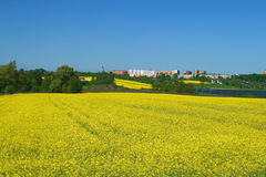 May scene. Canola fields landscape. Springtime in Poland, Europe. Upper Silesia region Royalty Free Stock Images