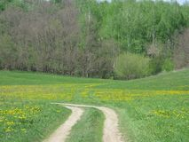 A Spring forest landscape. May sunny day, a road on a large blooming forest glade and a blossoming forest between small hills royalty free stock images