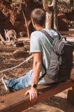 Young Man Watching Kangaroos in Sydney Stock Photo