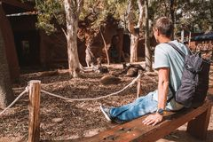 Young Man Sitting at Sydney Zoo Stock Photo