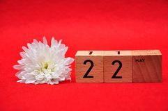 22 May on wooden blocks with a white daisy. On a red background royalty free stock images