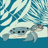 May 23 - World Turtle Day. Undrewater clipart , seashells and plants Stock Photography