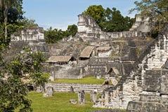 Maya acropolis in Tikal Stock Images