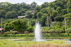 Maya bay in Jungle, Phi Phi  island, Thailand Stock Photography