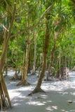 Maya bay Phi Phi Leh island, Thailand Royalty Free Stock Photo