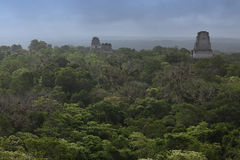 Maya buildings in the jungle in Tikal, Guatemala Stock Photography