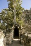 Maya Coba ruins Stock Images