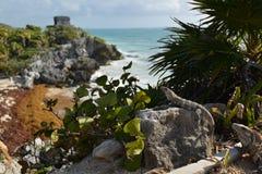 Maya de México, Riviera, Tulum Fotos de Stock Royalty Free