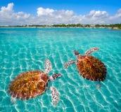 Maya de Riviera do photomount das tartarugas da praia de Akumal fotografia de stock royalty free