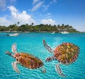 Maya di Riviera del photomount delle tartarughe della spiaggia di Akumal Immagine Stock Libera da Diritti