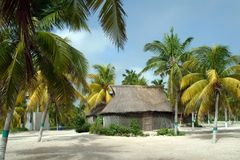 Maya house and palm trees Royalty Free Stock Image