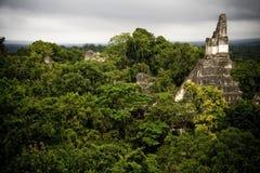 Maya piramide in Tikal Royalty-vrije Stock Foto's