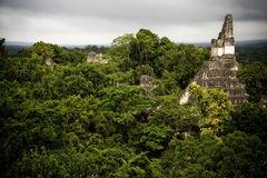 Maya pyramid in Tikal. Before the sunset and the tropical rain in Guatemala, central america surrounded by the rain forest Royalty Free Stock Photos