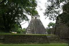 Maya Temple en Tikal, en la selva guatemalteca Foto de archivo