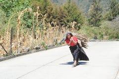 Maya vrouw het dragen stukken van hout voor het verwarmen van hun huis Stock Foto's