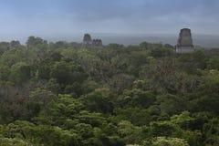 Mayagebäude im Dschungel in Tikal, Guatemala Stockfotografie
