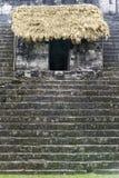 Mayan καταστροφές στη ζούγκλα Tikal Στοκ εικόνα με δικαίωμα ελεύθερης χρήσης